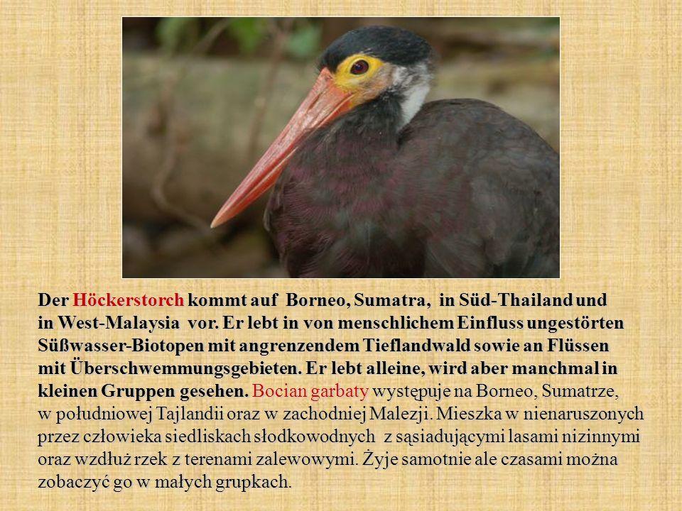 Der Höckerstorch kommt auf Borneo, Sumatra, in Süd-Thailand und in West-Malaysia vor.