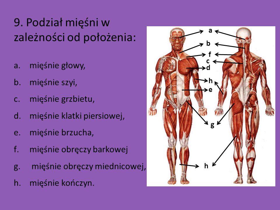 9. Podział mięśni w zależności od położenia: