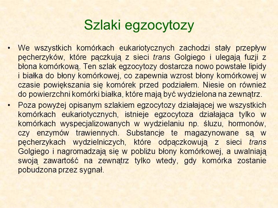 Szlaki egzocytozy