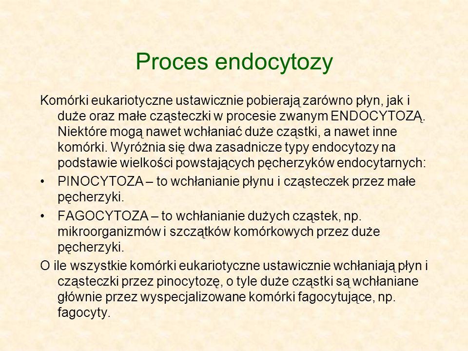 Proces endocytozy