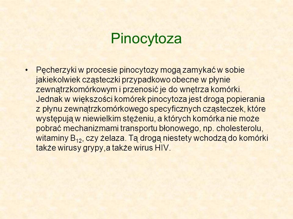 Pinocytoza