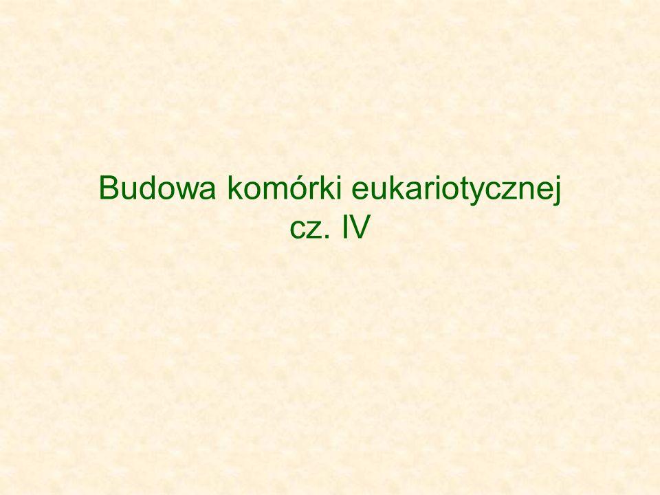 Budowa komórki eukariotycznej cz. IV