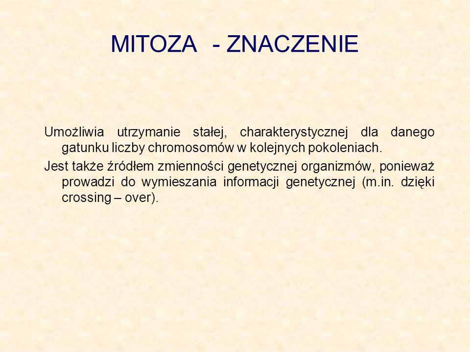 MITOZA - ZNACZENIEUmożliwia utrzymanie stałej, charakterystycznej dla danego gatunku liczby chromosomów w kolejnych pokoleniach.