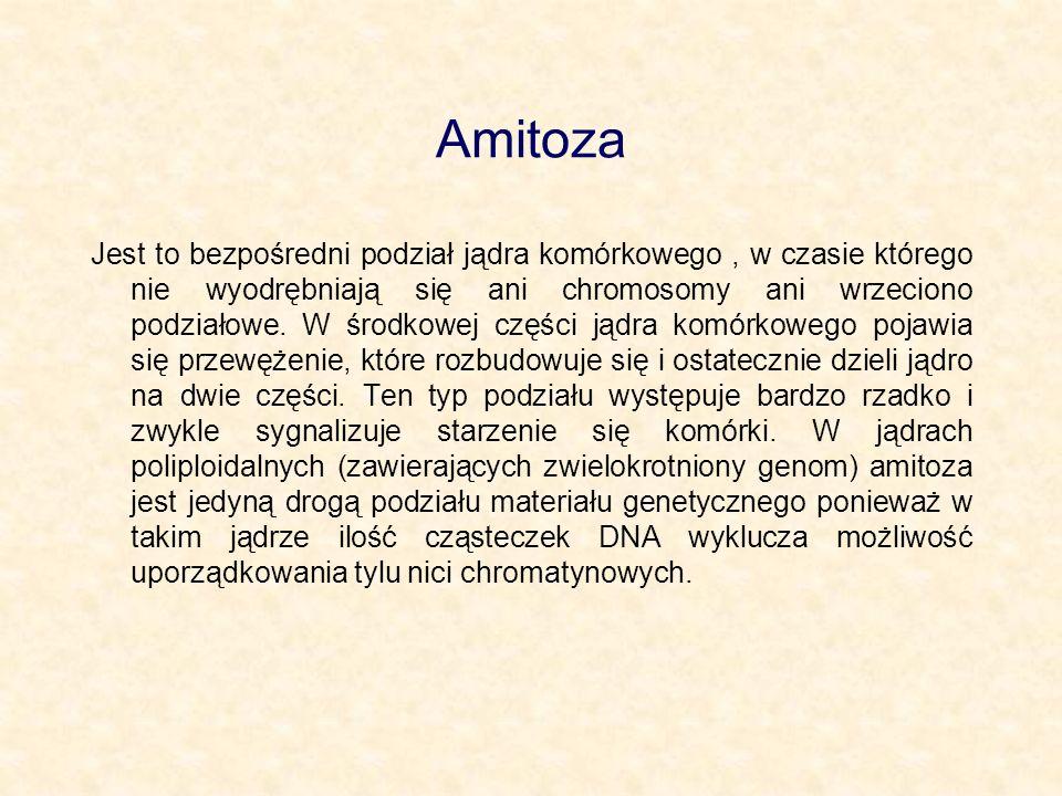 Amitoza