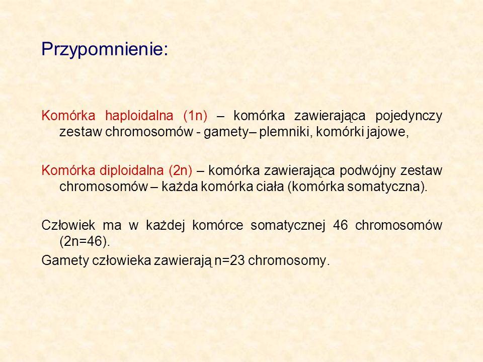 Przypomnienie: Komórka haploidalna (1n) – komórka zawierająca pojedynczy zestaw chromosomów - gamety– plemniki, komórki jajowe,
