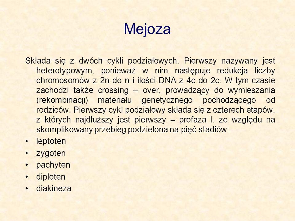 Mejoza