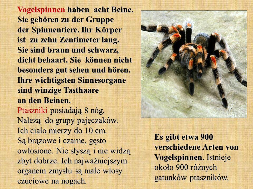 Vogelspinnen haben acht Beine