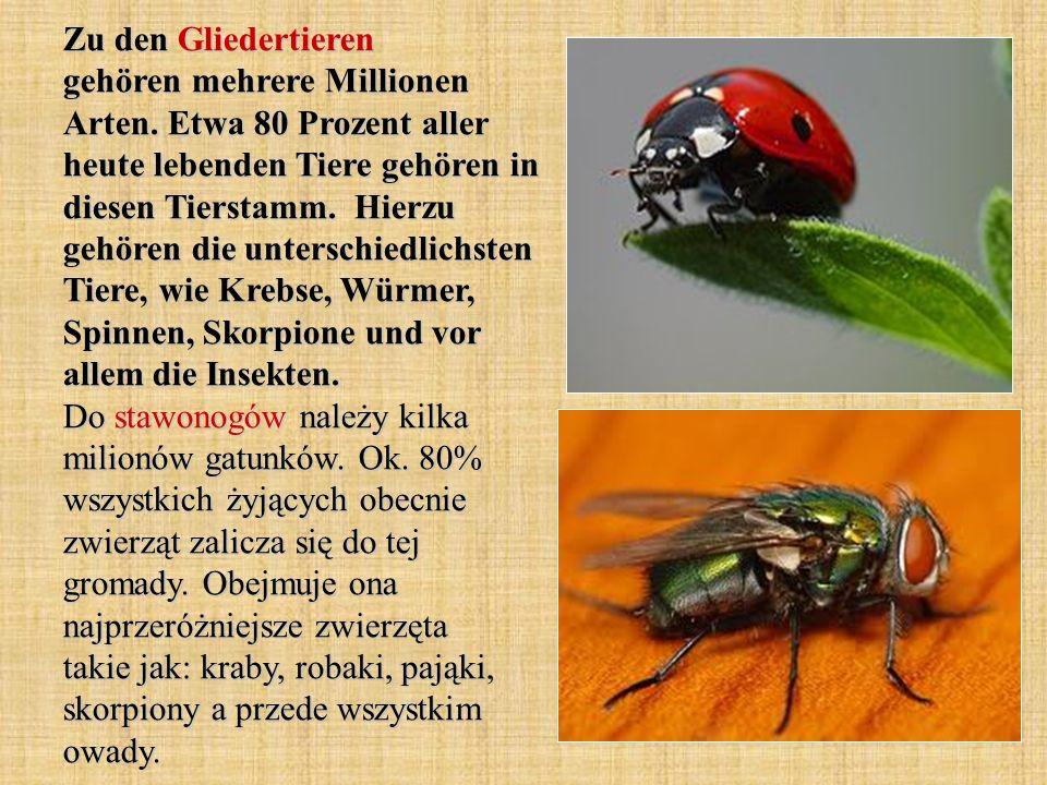 Zu den Gliedertieren gehören mehrere Millionen Arten