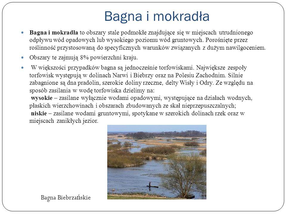 Bagna i mokradła Bagna Biebrzańskie