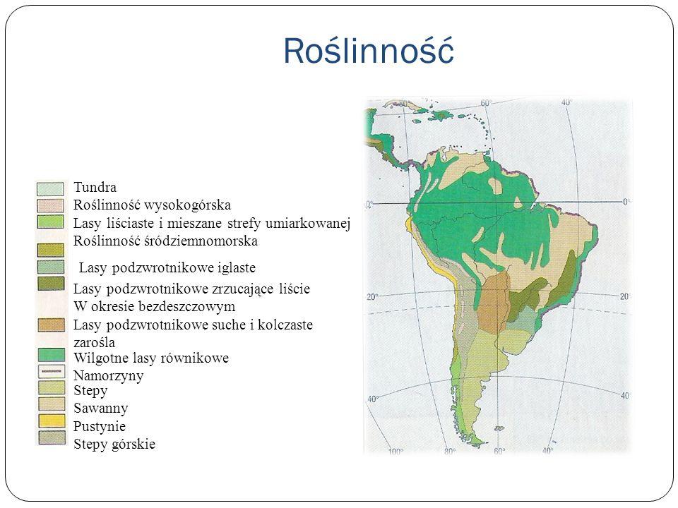 Roślinność Tundra Roślinność wysokogórska