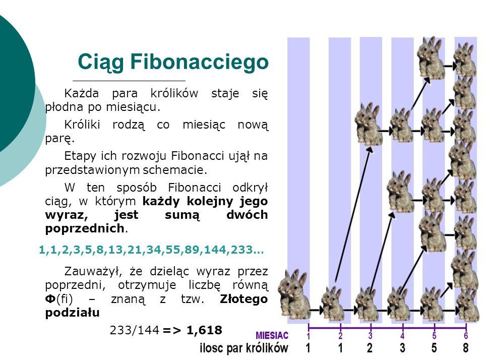 Ciąg Fibonacciego Każda para królików staje się płodna po miesiącu.