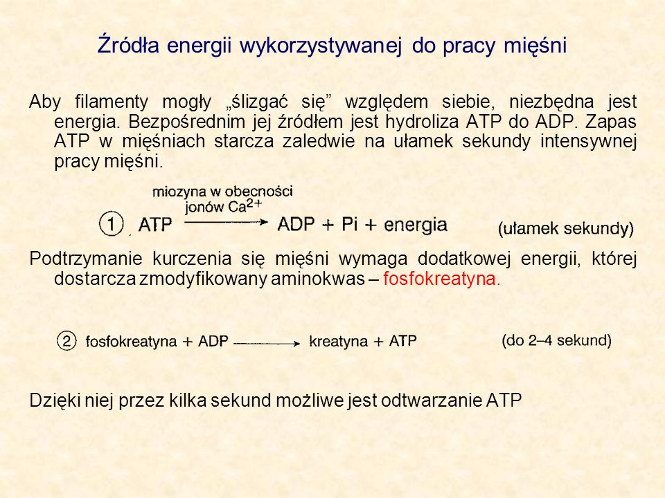 Źródła energii wykorzystywanej do pracy mięśni