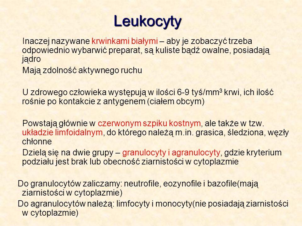 LeukocytyInaczej nazywane krwinkami białymi – aby je zobaczyć trzeba odpowiednio wybarwić preparat, są kuliste bądź owalne, posiadają jądro.