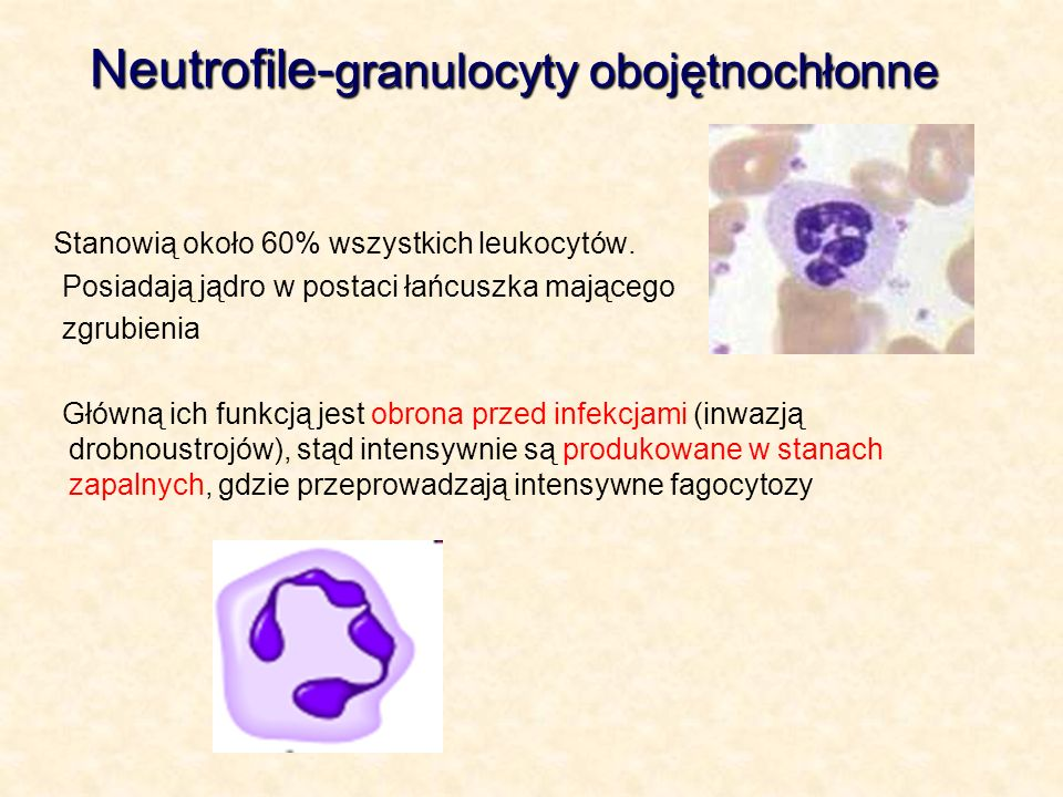 Neutrofile-granulocyty obojętnochłonne
