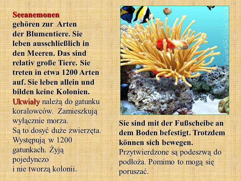 Seeanemonen gehören zur Arten der Blumentiere
