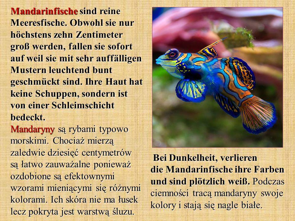 Mandarinfische sind reine Meeresfische