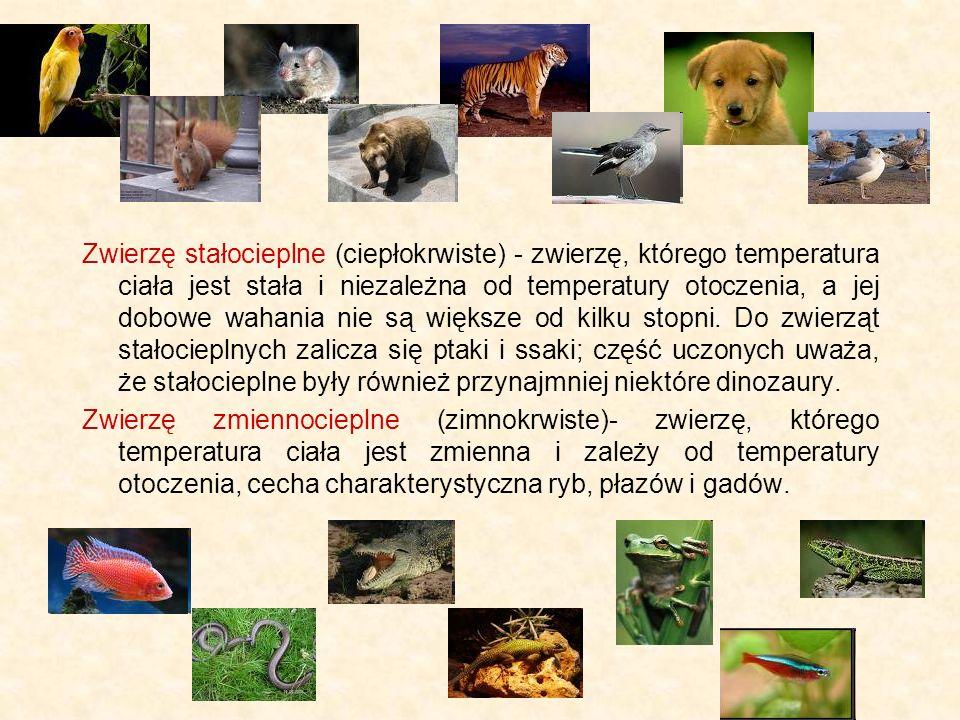 Zwierzę stałocieplne (ciepłokrwiste) - zwierzę, którego temperatura ciała jest stała i niezależna od temperatury otoczenia, a jej dobowe wahania nie są większe od kilku stopni. Do zwierząt stałocieplnych zalicza się ptaki i ssaki; część uczonych uważa, że stałocieplne były również przynajmniej niektóre dinozaury.