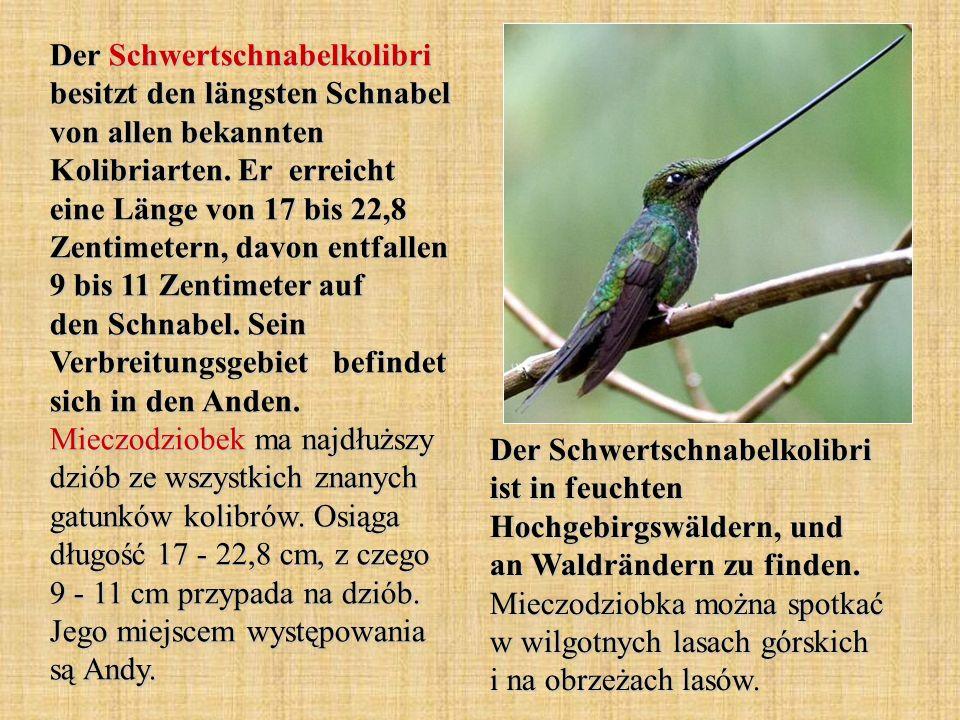 Der Schwertschnabelkolibri besitzt den längsten Schnabel von allen bekannten Kolibriarten. Er erreicht eine Länge von 17 bis 22,8 Zentimetern, davon entfallen 9 bis 11 Zentimeter auf den Schnabel. Sein Verbreitungsgebiet befindet sich in den Anden. Mieczodziobek ma najdłuższy dziób ze wszystkich znanych gatunków kolibrów. Osiąga długość 17 - 22,8 cm, z czego 9 - 11 cm przypada na dziób. Jego miejscem występowania są Andy.