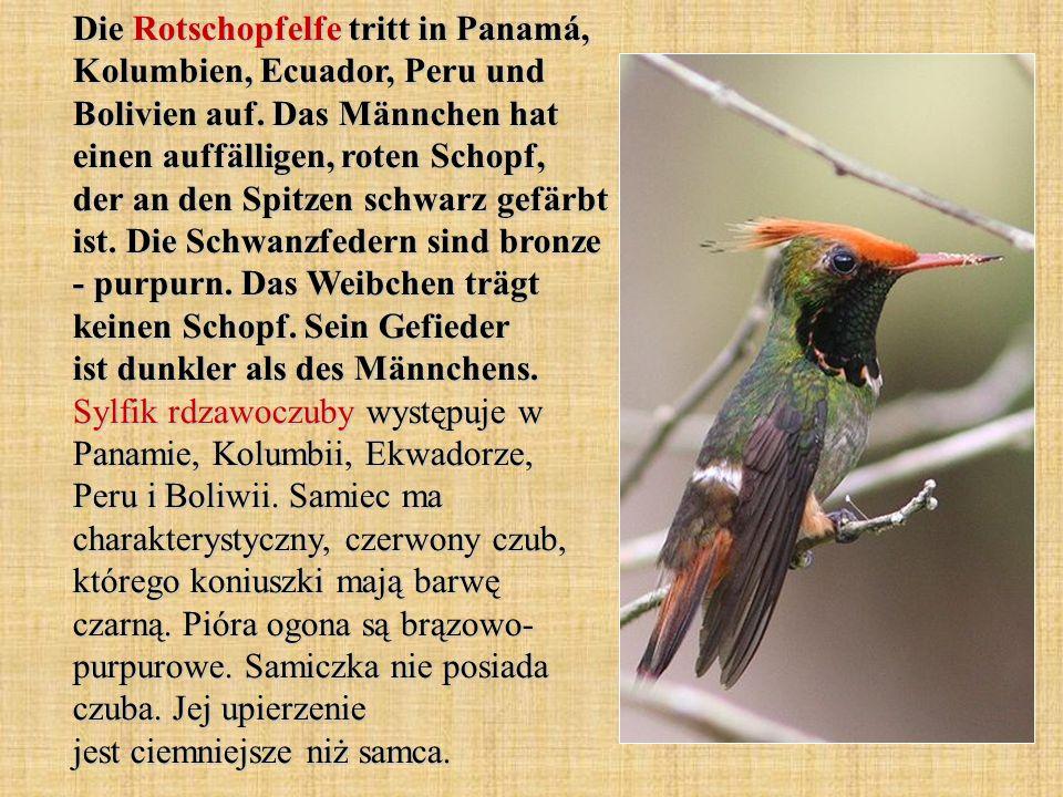 Die Rotschopfelfe tritt in Panamá, Kolumbien, Ecuador, Peru und Bolivien auf.