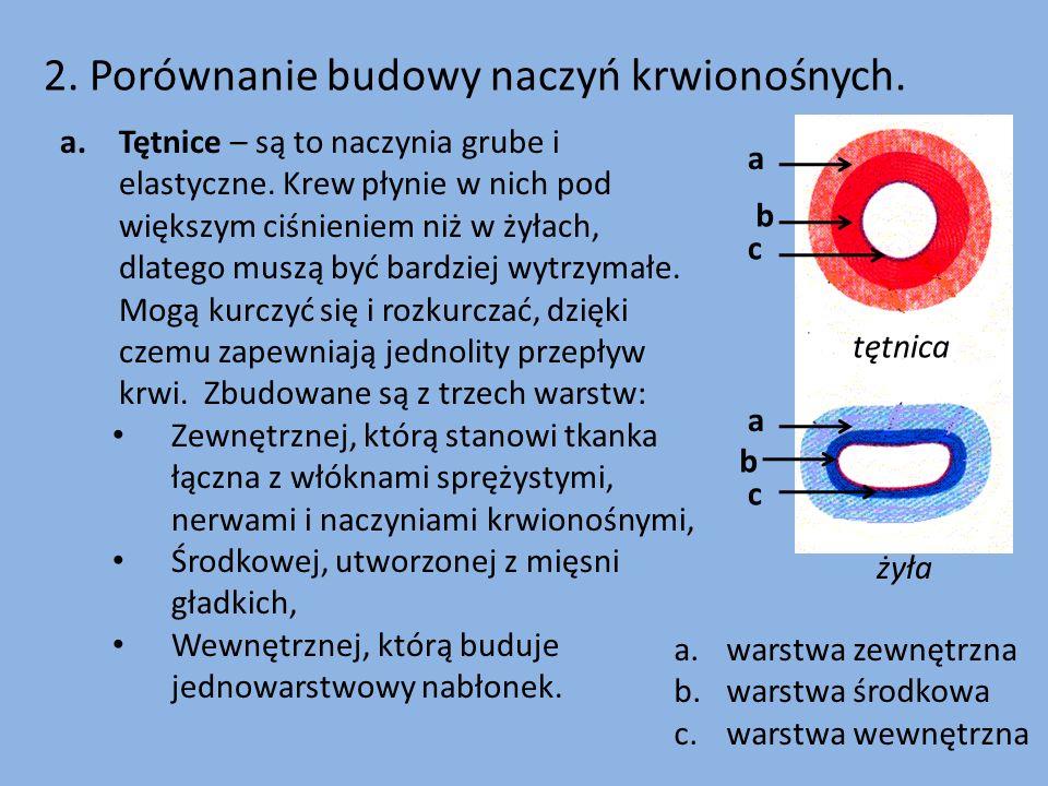 2. Porównanie budowy naczyń krwionośnych.