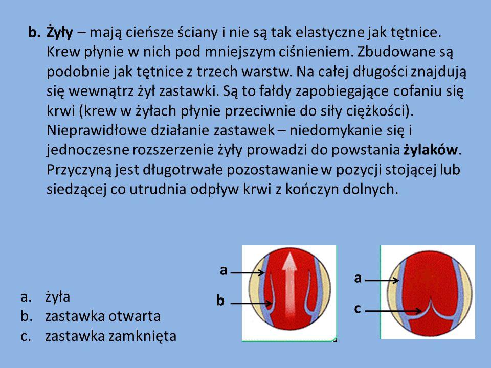 Żyły – mają cieńsze ściany i nie są tak elastyczne jak tętnice