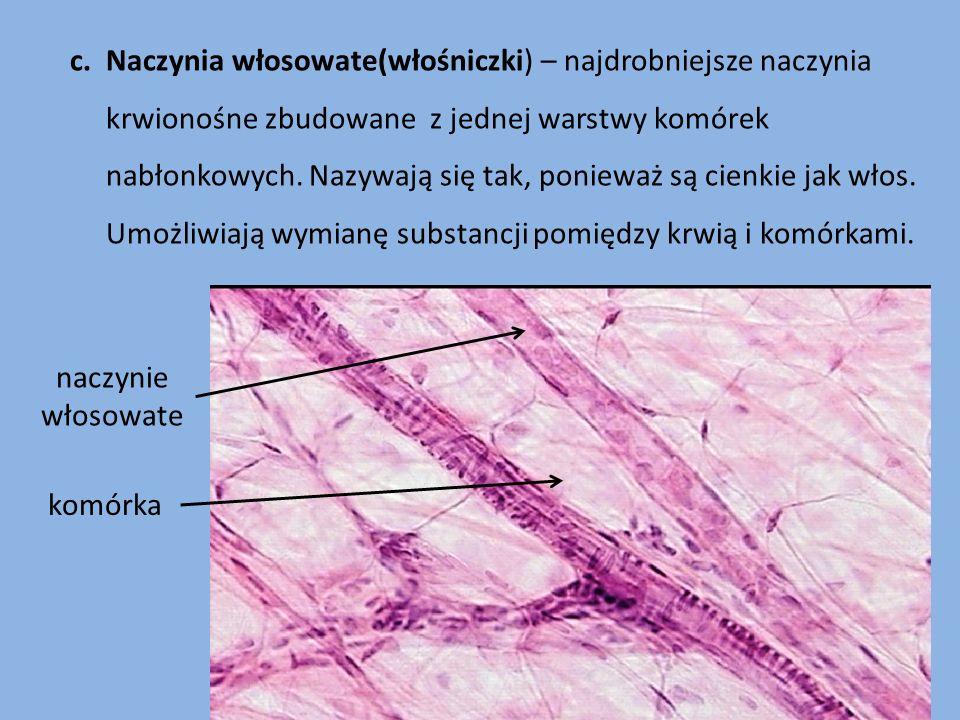 c. Naczynia włosowate(włośniczki) – najdrobniejsze naczynia krwionośne zbudowane z jednej warstwy komórek nabłonkowych. Nazywają się tak, ponieważ są cienkie jak włos. Umożliwiają wymianę substancji pomiędzy krwią i komórkami.