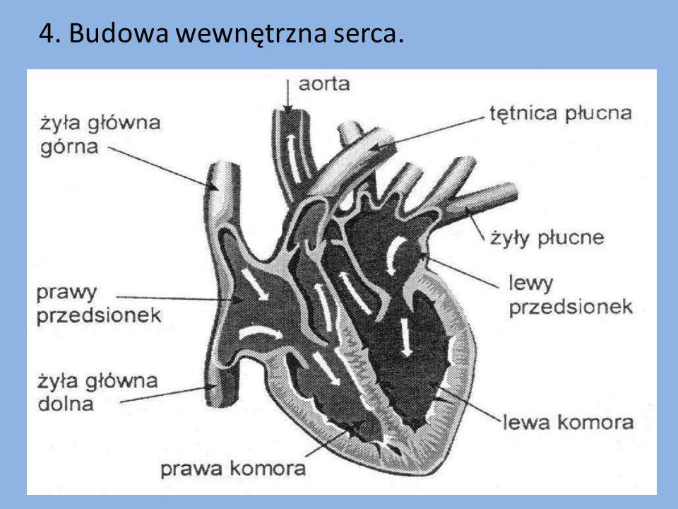 4. Budowa wewnętrzna serca.