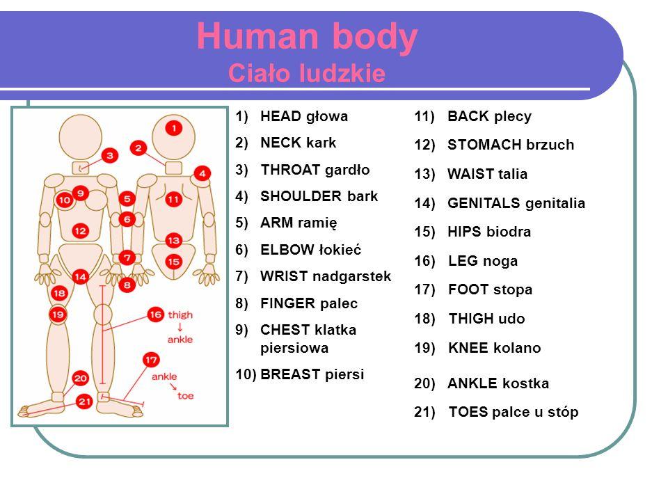 Human body Ciało ludzkie