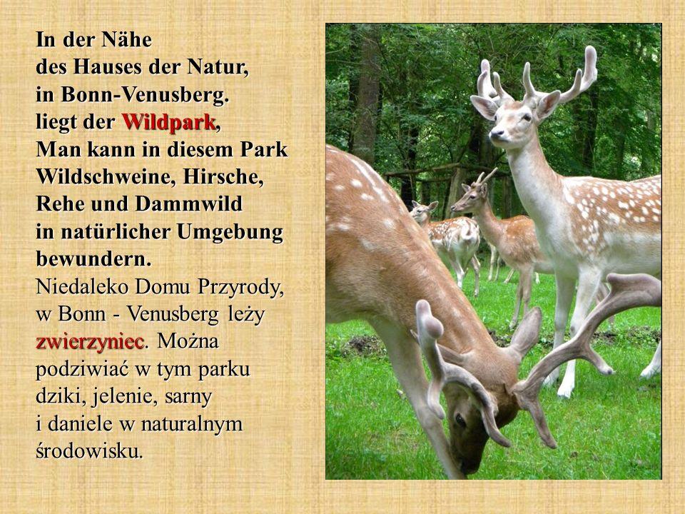 In der Nähe des Hauses der Natur, in Bonn-Venusberg