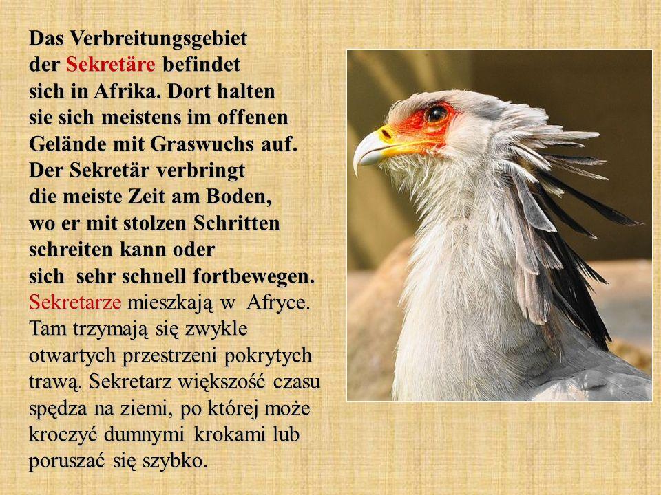 Das Verbreitungsgebiet der Sekretäre befindet sich in Afrika