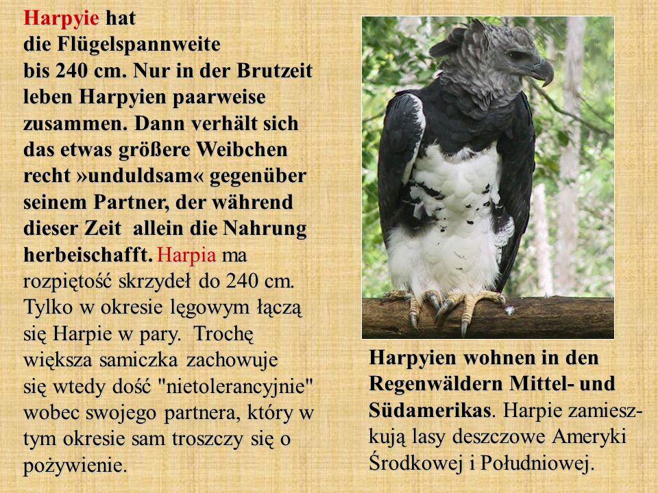 Harpyie hat die Flügelspannweite bis 240 cm