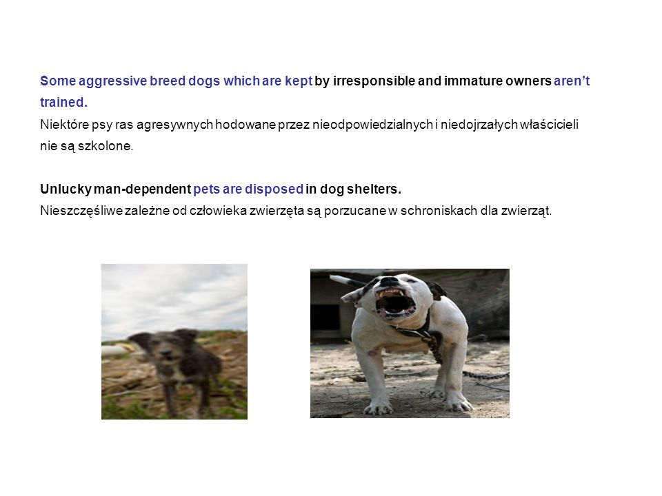 Some aggressive breed dogs which are kept by irresponsible and immature owners aren't