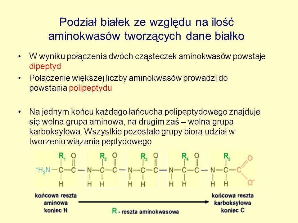 Podział białek ze względu na ilość aminokwasów tworzących dane białko