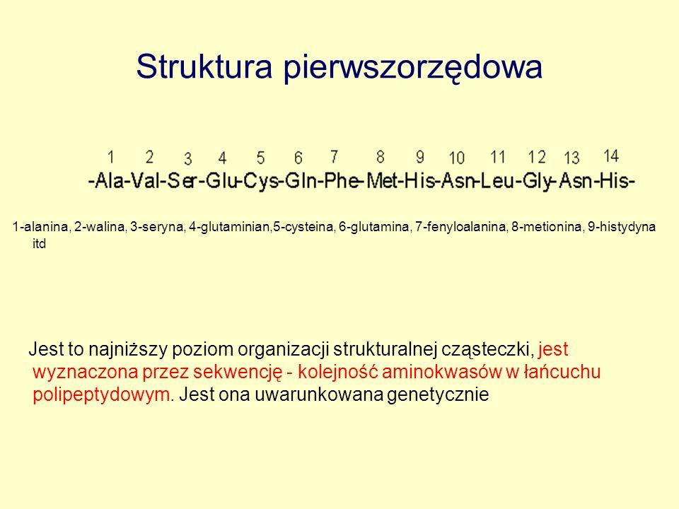 Struktura pierwszorzędowa