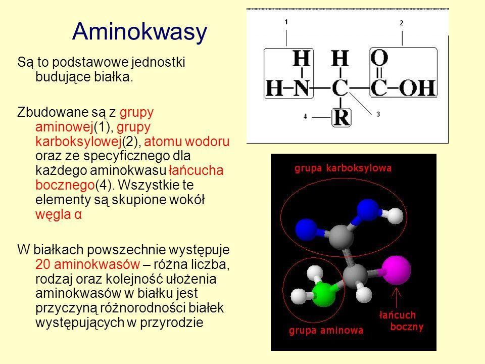 Aminokwasy Są to podstawowe jednostki budujące białka.