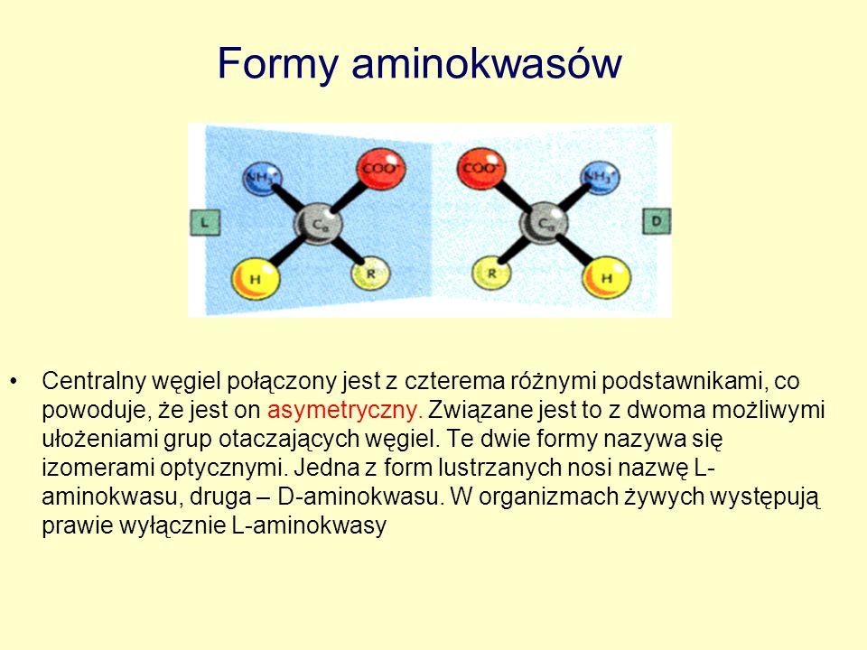Formy aminokwasów
