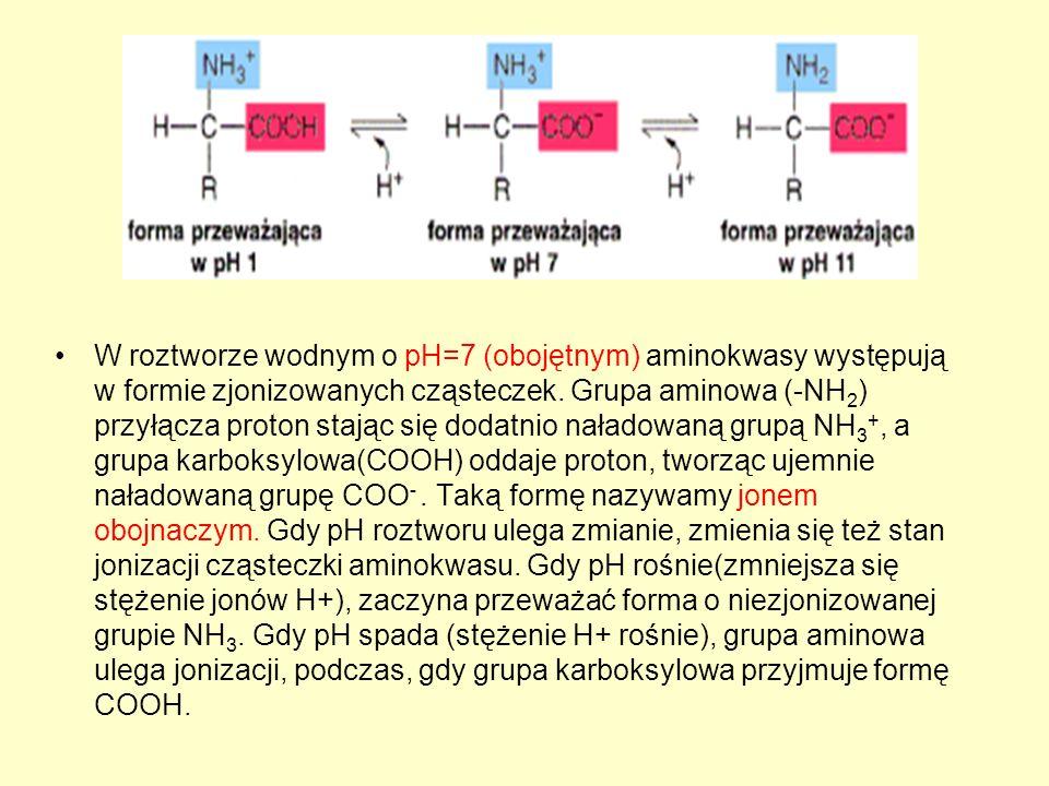 W roztworze wodnym o pH=7 (obojętnym) aminokwasy występują w formie zjonizowanych cząsteczek.