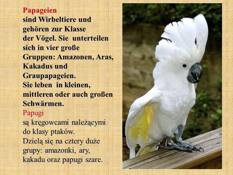 Papageien sind Wirbeltiere und gehören zur Klasse der Vögel