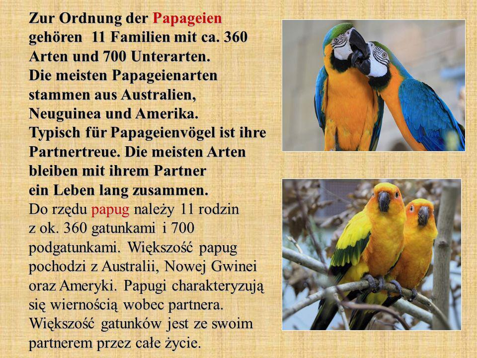 Zur Ordnung der Papageien gehören 11 Familien mit ca