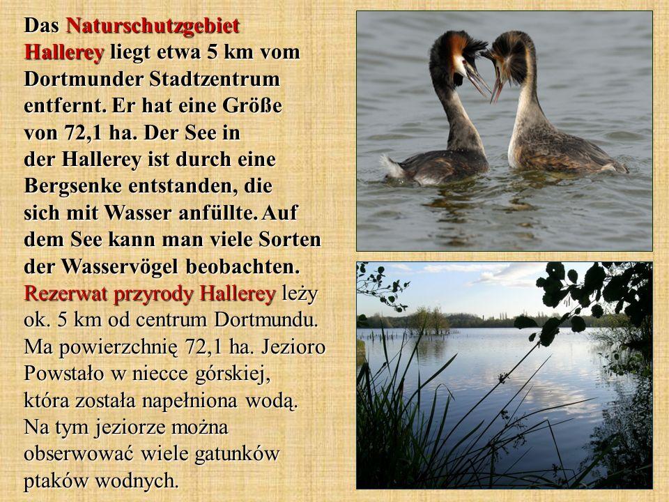 Das Naturschutzgebiet Hallerey liegt etwa 5 km vom Dortmunder Stadtzentrum entfernt.