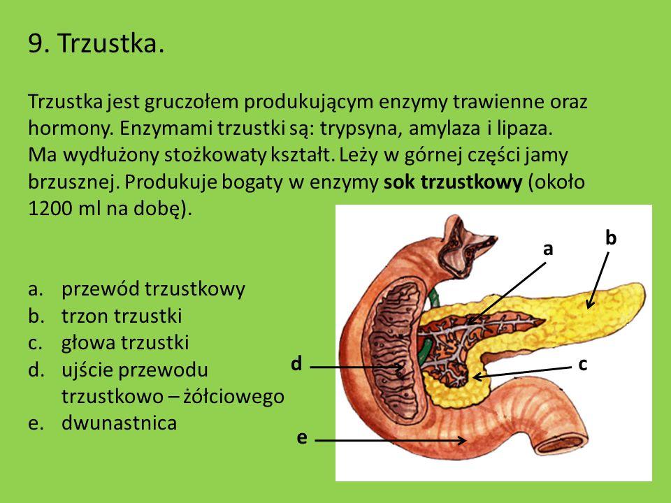 9. Trzustka. Trzustka jest gruczołem produkującym enzymy trawienne oraz hormony. Enzymami trzustki są: trypsyna, amylaza i lipaza.