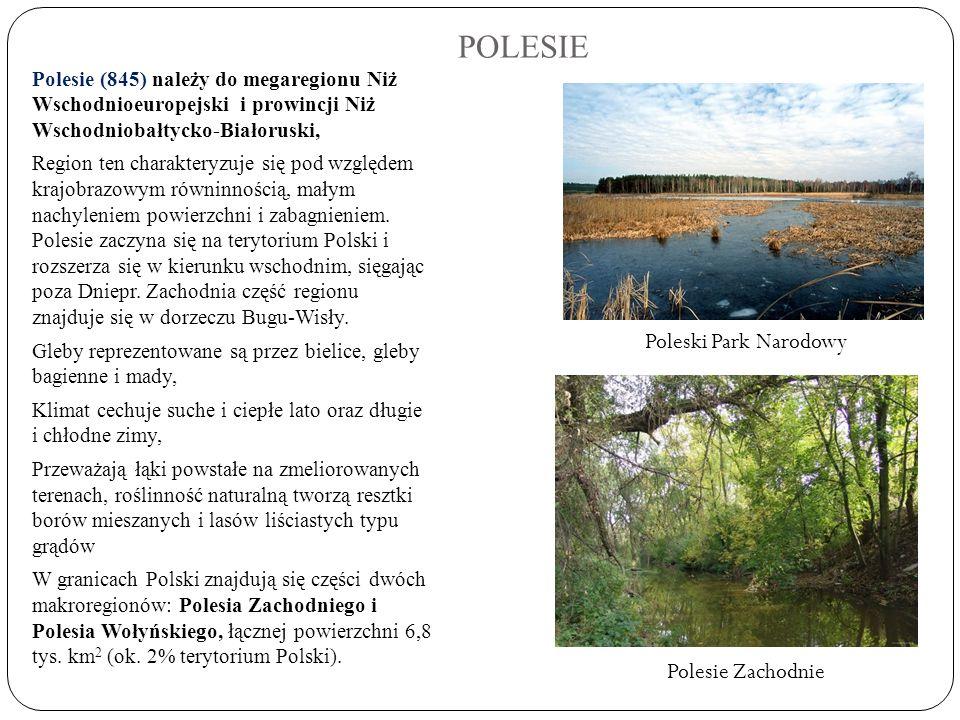 POLESIE Poleski Park Narodowy Polesie Zachodnie