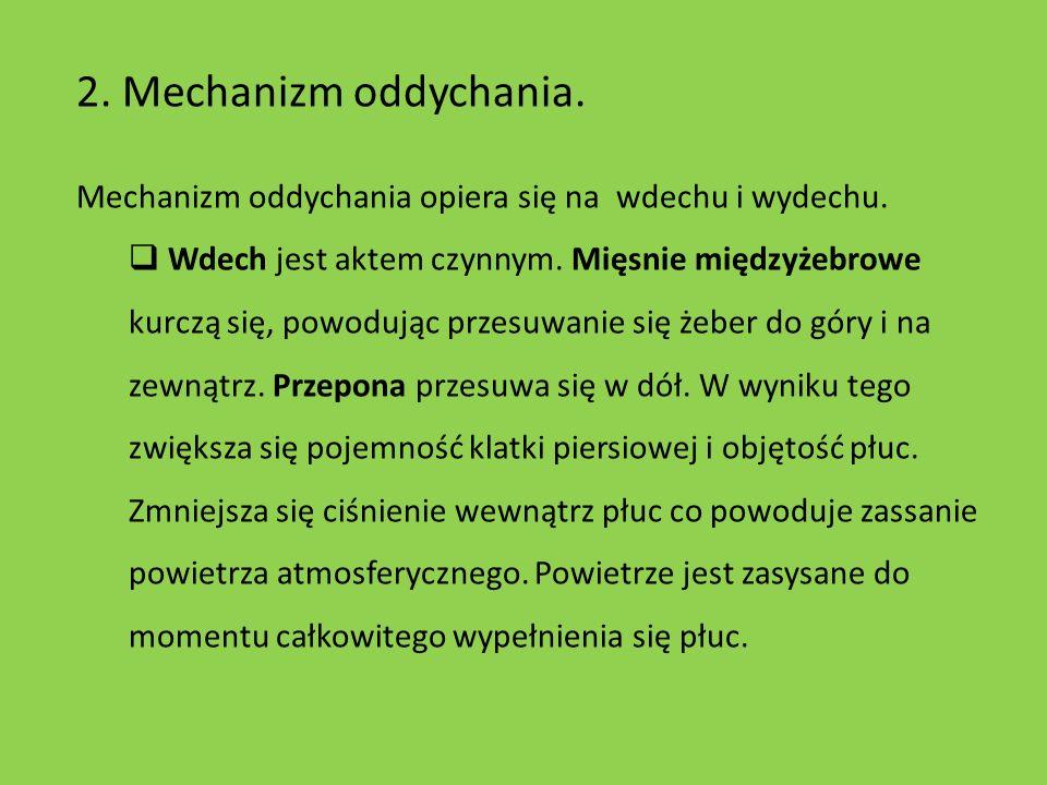 2. Mechanizm oddychania.Mechanizm oddychania opiera się na wdechu i wydechu.
