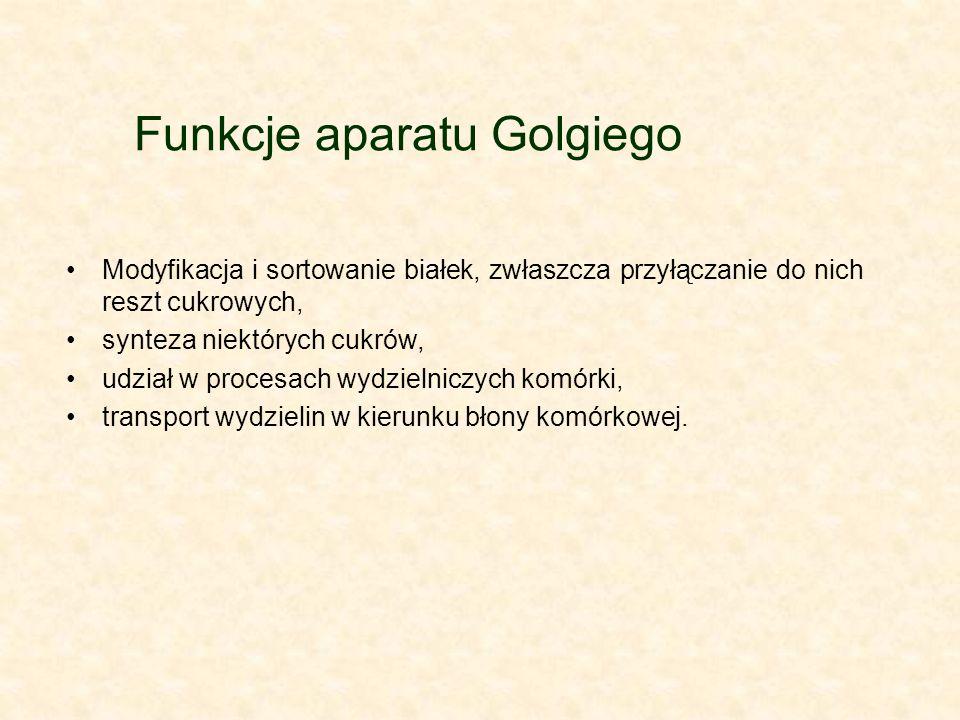 Funkcje aparatu Golgiego