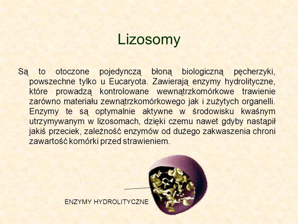 Lizosomy