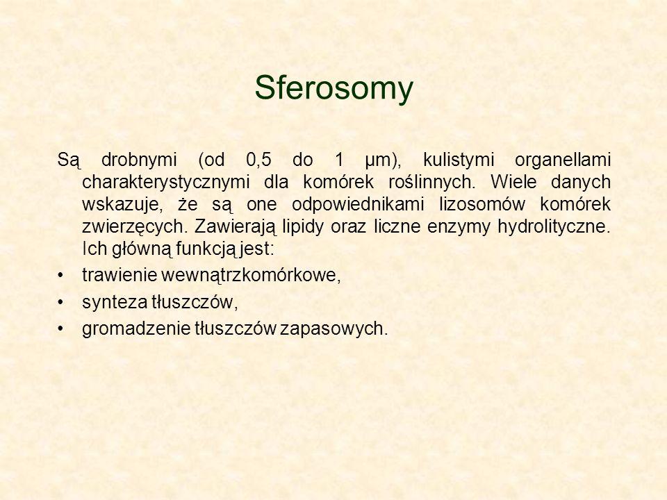 Sferosomy