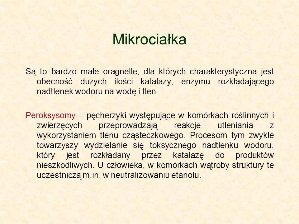 Mikrociałka