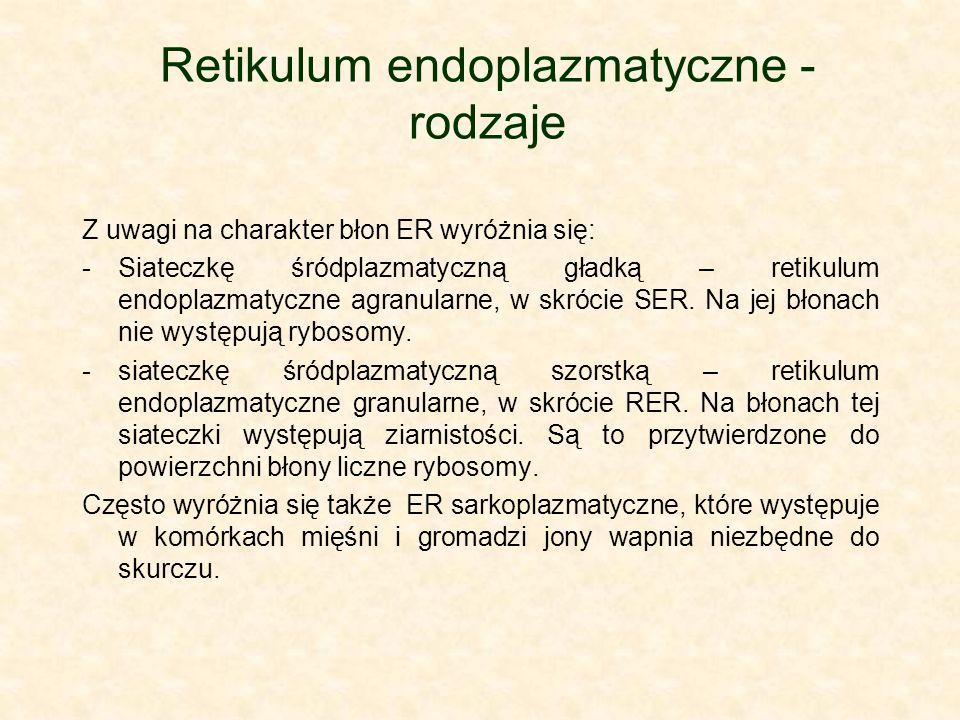 Retikulum endoplazmatyczne - rodzaje