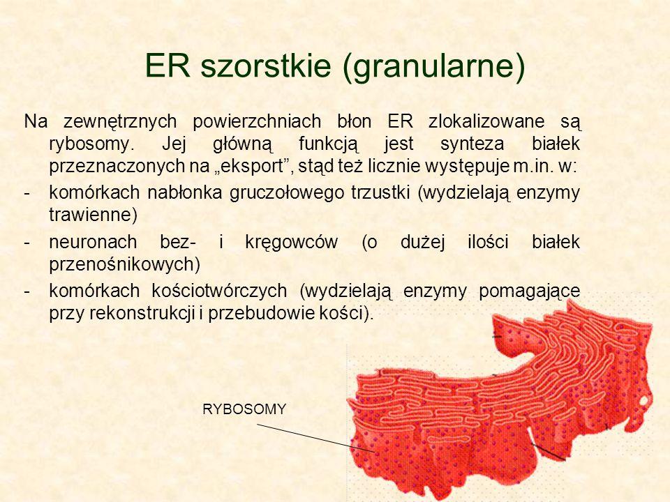 ER szorstkie (granularne)