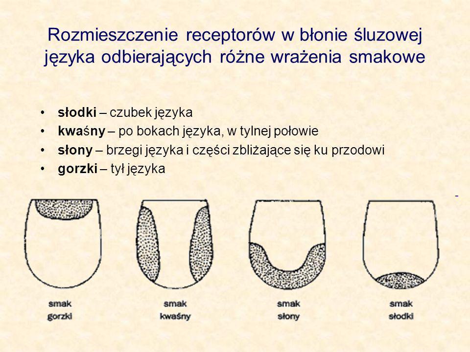 Rozmieszczenie receptorów w błonie śluzowej języka odbierających różne wrażenia smakowe